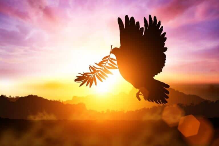 duif voor wereldvrede