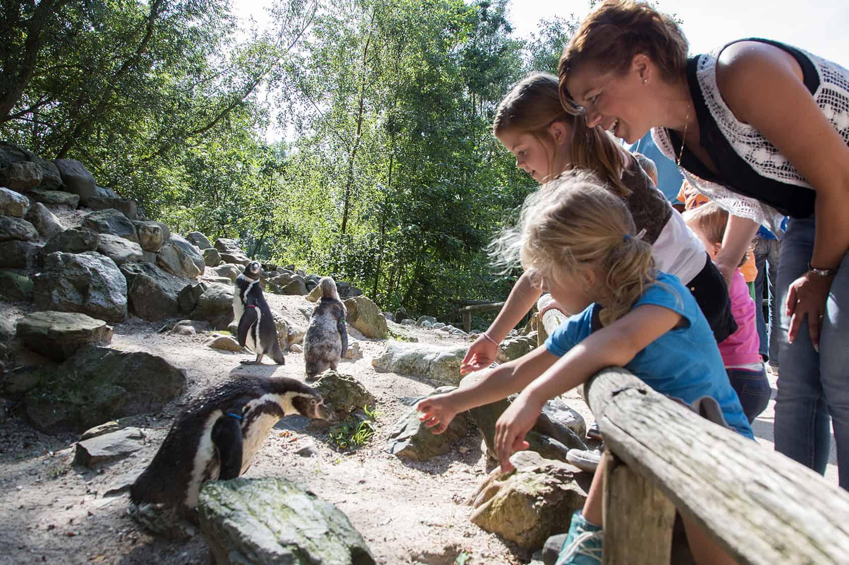 Pinguïns Aquazoo
