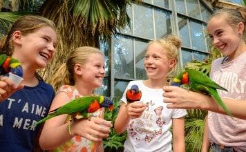 Vogels voeren Vogelpark Avifauna