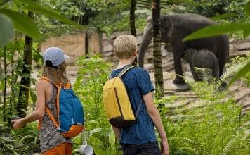 WILDLANDS Jungola olifantenvallei