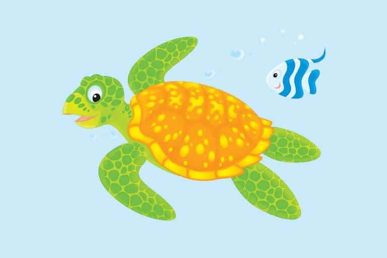 Kleurplaat schildpad ingekleurd voorbeeld