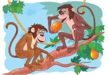 Voorbeeld kleurplaat apen ingekleurd