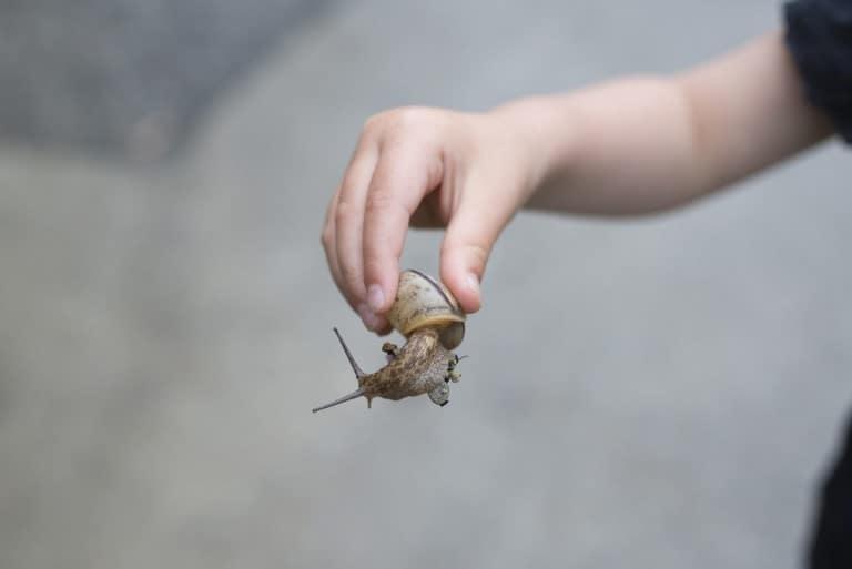 Kind vindt slak